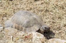 Schildkröte-bei-Kerameikos-4285