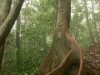 Tropischer Baum